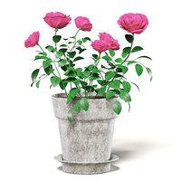 pink roses ceramic pot 3D