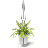 3D fern hanging pot