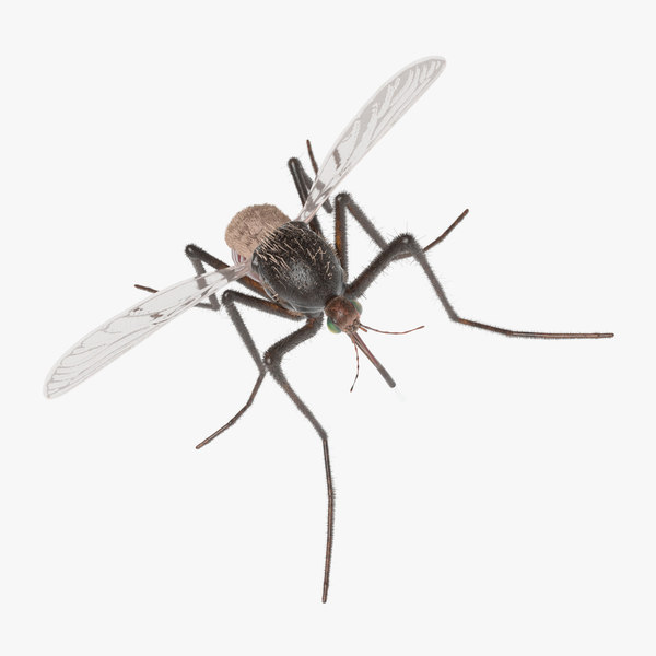 3D model mosquito animation