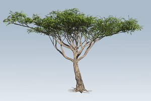 3D branches leaves model