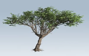 branches leaves 3D model