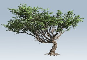 branches leaves 3D