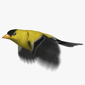 3D american goldfinch animation 2