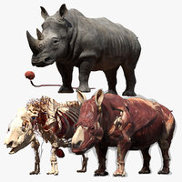 Rhino Anatomy