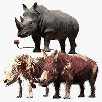 rhino anatomy model