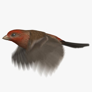 3D model house finch animation 2
