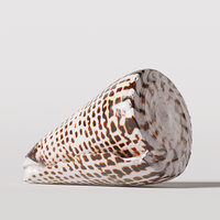 seashell shell 3D