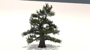 3D model japanese pine tree