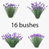 lavandula pack 02 flowers 3D model