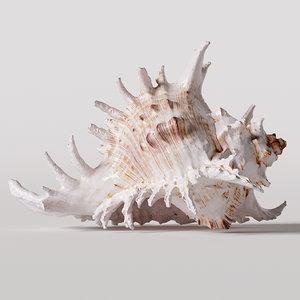 3D seashell corona