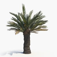 3D tree cycad brood boom model