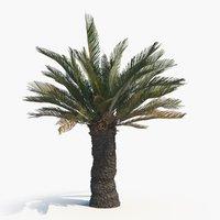 3D tree cycad brood boom model