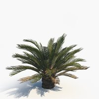 3D model scan cycad broodboom