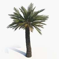 scan cycad broodboom 3D model