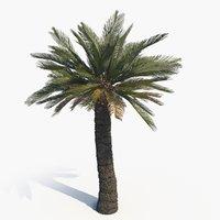 scan cycad broodboom 3D model
