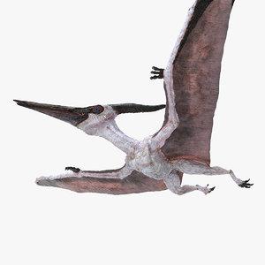 3D model pterosaur pteranodon white flying