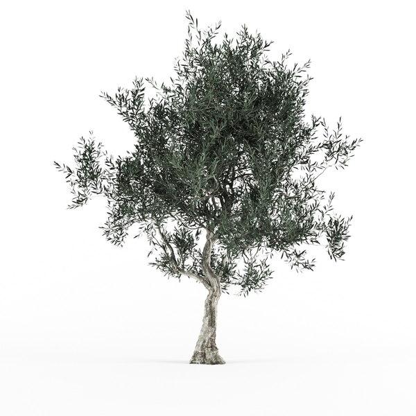 3D olive tree 3 var model