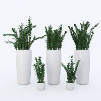 zamioculcas plant model