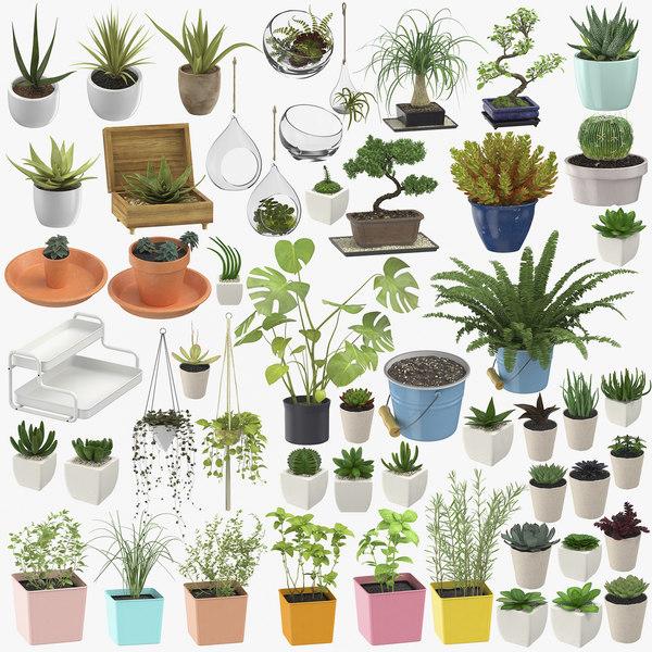 indoor plants herbs - 3D model
