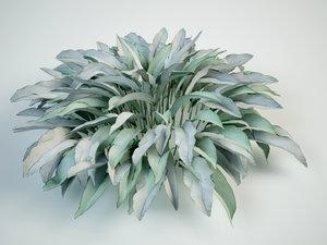 3D model pulmonaria longifolia