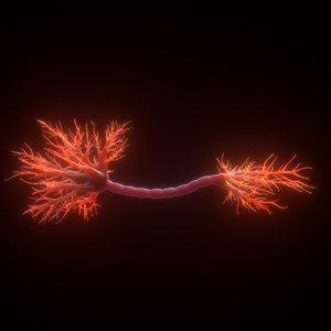 3D neuron human anatomy model