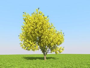 realistic acacia tree 3D model