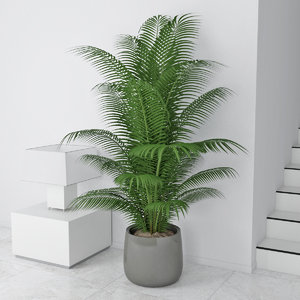 palm pot 3D model