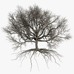 oak dry 2 tree 3D model