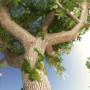 3D ash-trees 10 types trees model