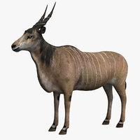common eland model
