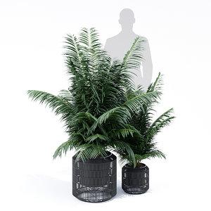 nadda polyrattan plant model