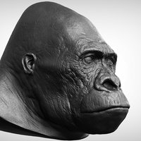 3D gorilla head realistic model