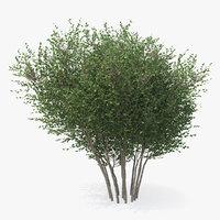big bush 3D model