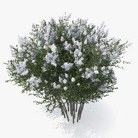 crepe myrtle tree model