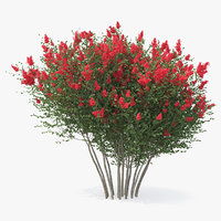 3D red crepe myrtle tree
