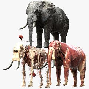 3D elephant africa
