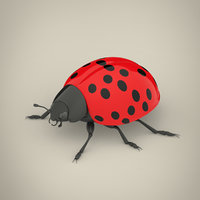 3D ladybird modeled