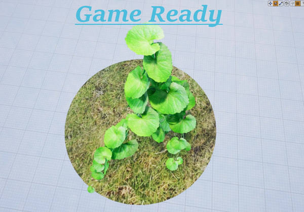 brazilian pennywort model