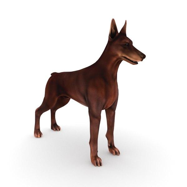 3D dobermann dog model