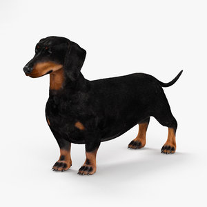 3D dachshund teckel dog model