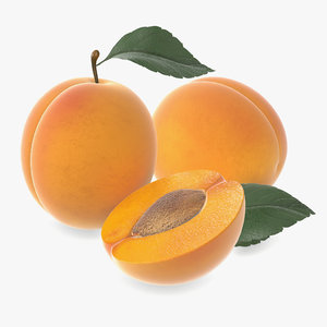 apricot fruit fresh 3D model