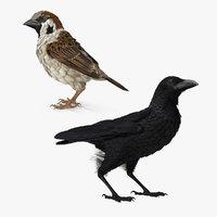 raven sparrow 3D model