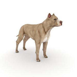 3D pitbull dog