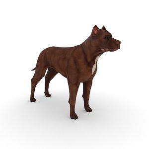 pitbull dog model