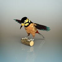 3D woodpecker bird model