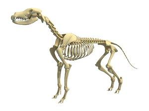 3D model dog skeleton animal