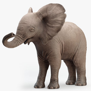 3D model rigged elephant baby