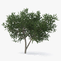 small evergreen tree green 3D model