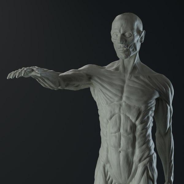 3D male anatomy body