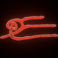 3D model ebola virus